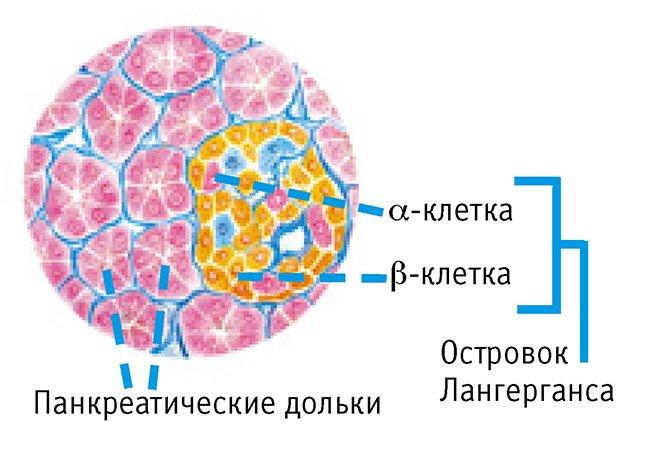 Диффузное увеличение поджелудочной железы. Увеличение хвоста и головки поджелудочной.