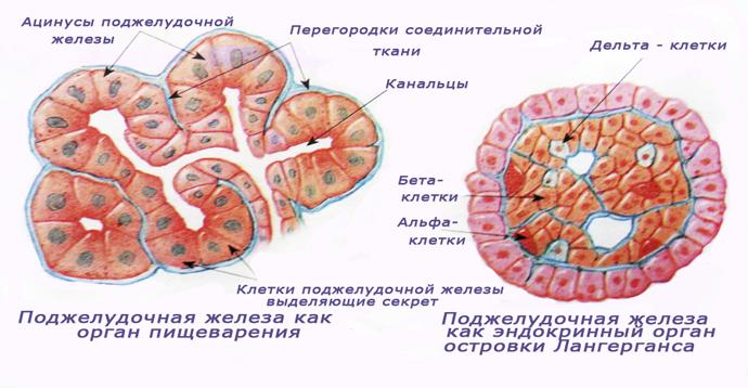 Прогноз жизни при раке поджелудочной железы: группа риска и стадии болезни