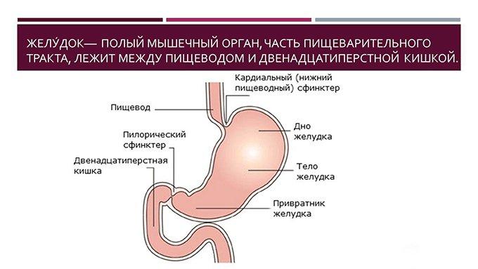 Лечение желудка и кишечника в домашних условиях